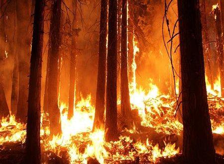Внимание! Пожароопасен сезон за горите в Смолянско