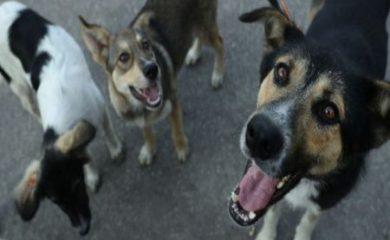 Община Смолян търси решение на проблема с бездомните кучета