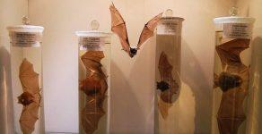 Музеят на родопския карст в Чепеларе отвори врати след пълно обновяване