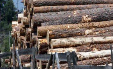 Над 80 процента от падналата дървесина в Пампорово е добита