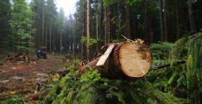 Отново незаконна сеч в Родопите