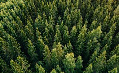 Обявиха за защитена зона част от Родопите