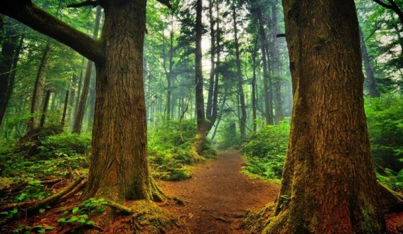 Инициативата за опазване на старите гори в България е отличена в конкурс на Европейската комисия