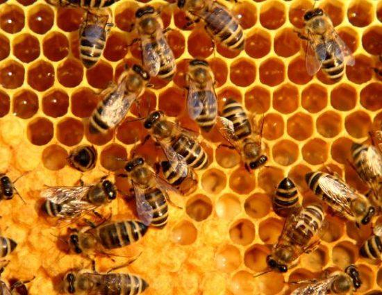 От 11 август животновъди и пчелари кандидатстват за финансово подпомагане по de minimis