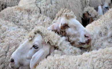 Земеделските стопани от област Смолян получиха близо 14 млн. лв. субсидии