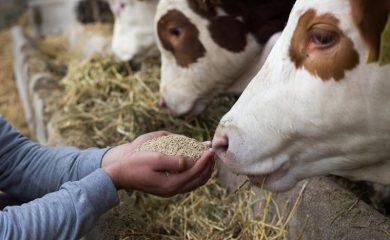 Животновъди в Смолянско получиха над 400 хиляди лева извънредна помощ