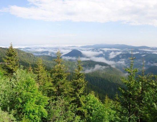 143 заявления за изкупуване на горски имоти са подадени в ЮЦДП-Смолян