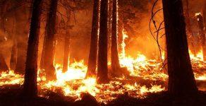 Голям горски пожар край Девин