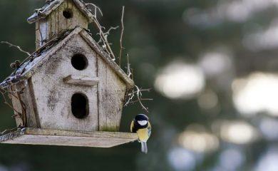 РИОСВ-Смолян обяви конкурс за изработка на къщички за птички