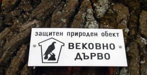 Обявиха вековен орех в родопско село за защитено дърво