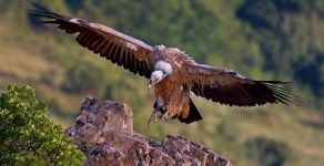 Преброиха над 1500 птици от 21 вида в Източните Родопи